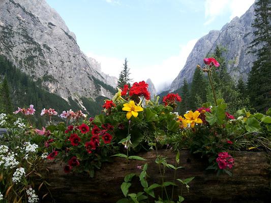 Colori di montagna di claudio_sposetti