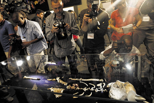 Fossils of a 2million-year-old Australopithecus sediba discovered at the Cradle of Humankind on display at the Origins Centre, at Wits University