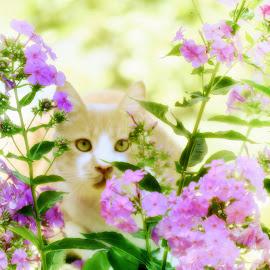 Honey by Diane Merz - Digital Art Animals ( flowers, color, nature, animal, manipulation )