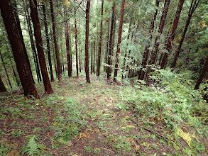 下に林道が見える(ここを降りる)