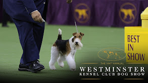 144th Westminster Kennel Club Dog Show thumbnail
