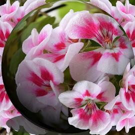 summer flower by LADOCKi Elvira - Digital Art Things
