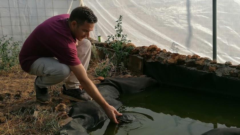 Tiene un recito vallado con un estanque para tortugas.