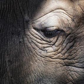 by Nancie Rowan - Animals Other Mammals