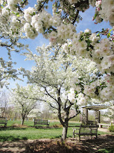 Photo: Benches and a gazebo under white blossoms at Crab Apple Alley of Cox Arboretum and Gardens Metropark in Dayton, Ohio.