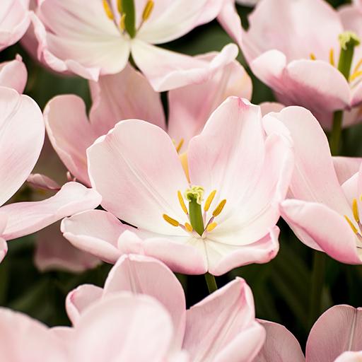 floral flowers hd apl di google play
