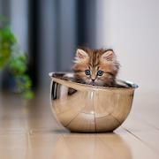 Cute kitten wallpapers hd apps on google play cute kitten wallpapers hd altavistaventures Images