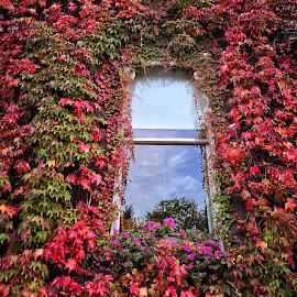 Window  by Monita Alstadsæter - Buildings & Architecture Architectural Detail ( window, autumn )