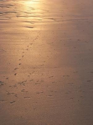 Riflessi e bassa marea di namadria