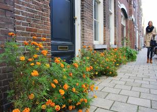 Photo: Geveltuin met oranje Afrikaantjes in de Willemsstraat