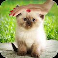 Pat a Kitten 1.0 icon