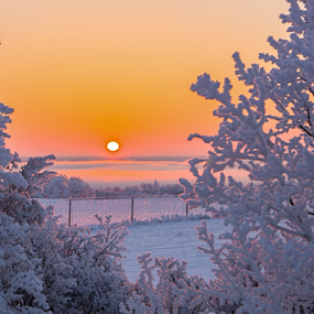 Meet me on the other side by Charles Adam - Landscapes Sunsets & Sunrises ( cool, clouds, hoar frost, crisp, morning glory, travel, north, valley, landscape, morning, glow, sun, early morning, fence, dawn, cold, bushes, fog, snow, trees, sunrise, early, branches,  )