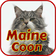 Maine Coon Wallpapers APK