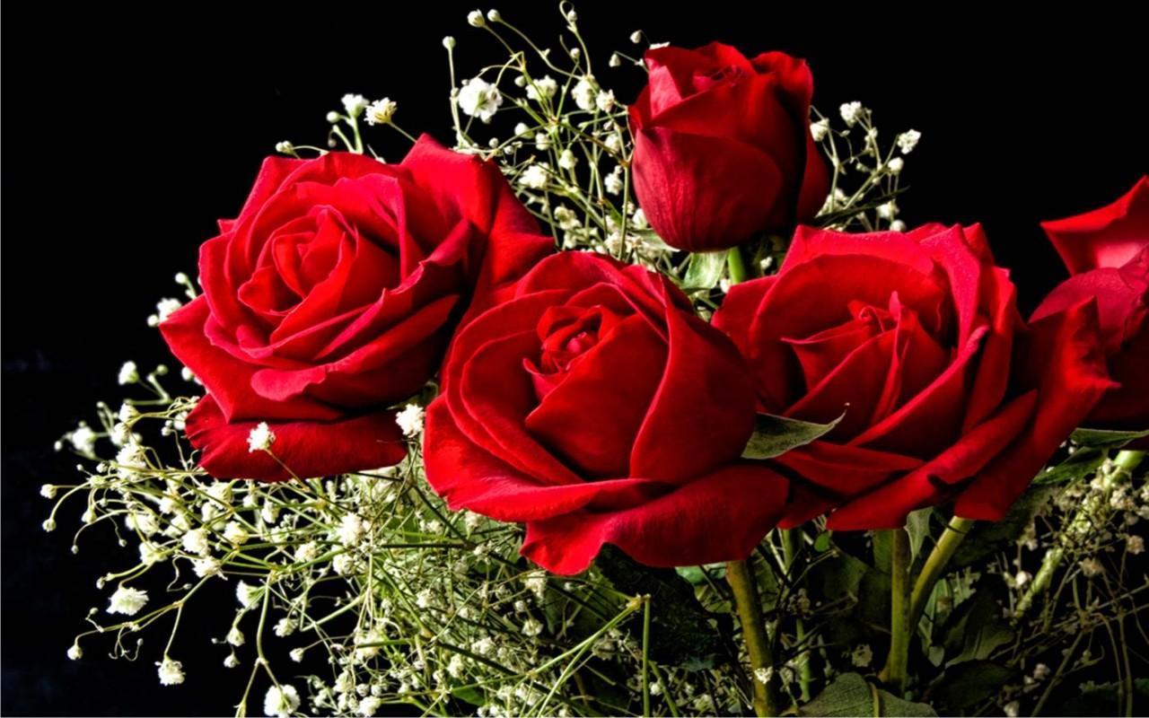 Image result for Red Rose