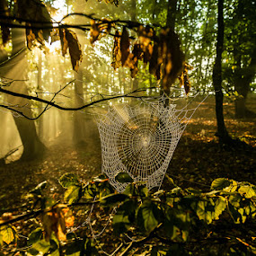 spiderweb by Jeno Major - Landscapes Forests ( forests, nature, nature up close, romania, landscapes )