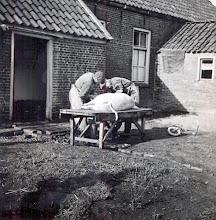 Photo: Varken slachten bij B. Nijhof, slachters zijn Rieks Oosting en Hendrik Vedder