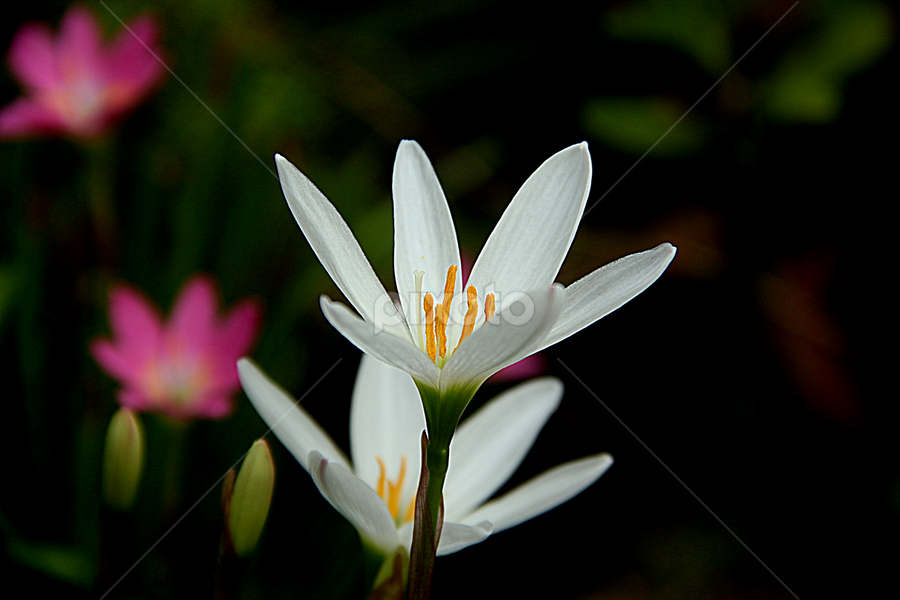 by Subho Saha - Flowers Flowers in the Wild
