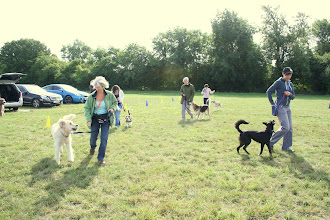 Photo: DogBasics Fun Day 2013 - playing the Sharks game. Hamish Golden with Nina, Buddy Beagle with Katie, Gretl Golden X with Anne, Henry Whippet with Lily, Daffy BC with Miriam