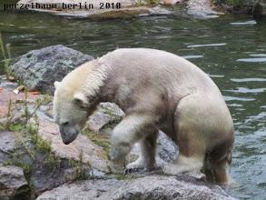 Photo: Knut hat die Insel erobert :-)