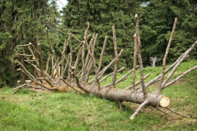 Trees – Friend Or Foe? Why The Answer Isn't As Clear As You Think