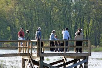 Photo: Watching ospreys fishing