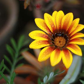 by Mussarrat Fatima - Nature Up Close Flowers - 2011-2013