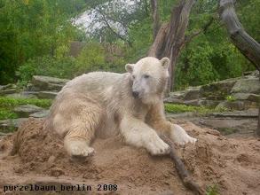 Photo: Ist gemuetlich hier, findet Knut ;-)
