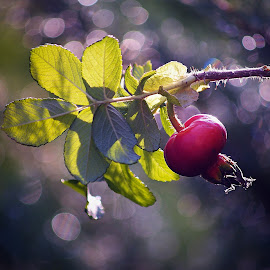 by Miroslava Winklerová - Nature Up Close Other Natural Objects (  )