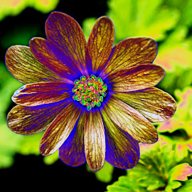 Colourful Delight by Russell Mander - Flowers Single Flower ( coloured flowe, coloured flower )
