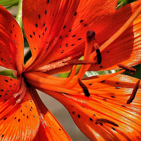 Brilliant! by Sue Green - Nature Up Close Flowers - 2011-2013 ( plants, trees, flowers,  )