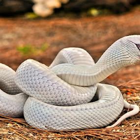 by Arief Wardhana - Animals Reptiles