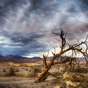 Furnace Creek by Mike Woodford - Landscapes Deserts ( desert, dry, tree, nevada, furnace, hot, dead, parched, HDR, Landscapes,  )