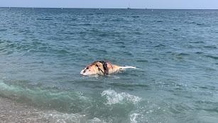 Un delfín aparece muerto en la playa del Zapillo.