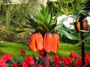 Photo: Le parc floral du Keukenhof.