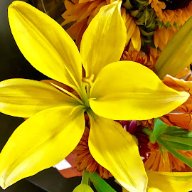Yellow Lily by Peter DiMarco - Flowers Single Flower ( flowers, yellow flower, flowering, flower, lilly )