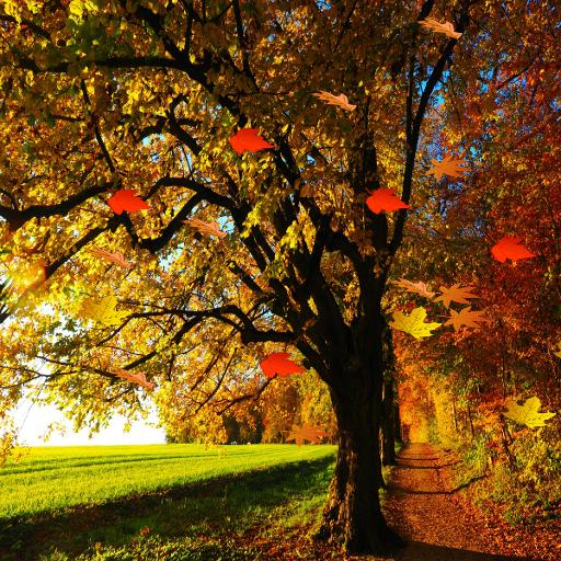 가을의 HD 라이브 배경 화면 프로 잎
