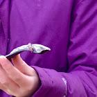 Field Slug
