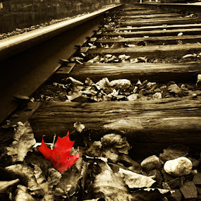 Single Red Leaf on the Tracks by Jim DeMicco - Transportation Trains ( sepia, red, leaf, tracks )