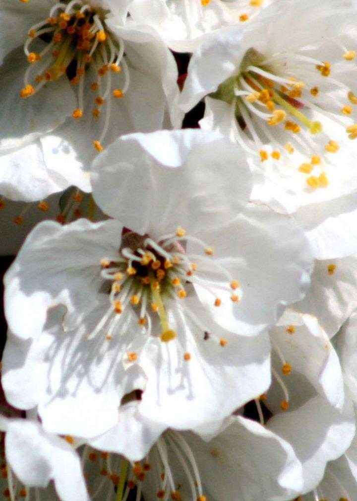 in fiore di ireishtar