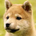 cute dog live wallpapers icon