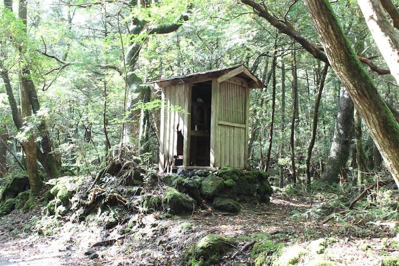白骨死体に謎の遺品がゴロゴロ…樹海取材のプロが語る、猛暑でも冷や汗の出る「富士山・青木ヶ原」散歩案内