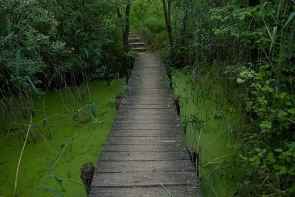 Biodiversum – Nature Reserve Haff Reimech