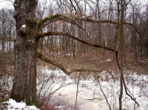 Photo: View from the Spring Pond Trail near Eddy Discovery Center.