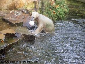 Photo: Knut holt den Ball wieder aus dem Wasser ;-)