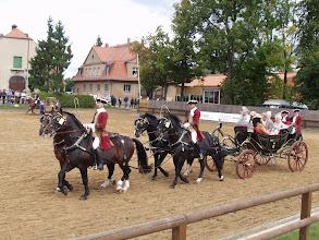 Photo: Hengstparade Moritzburg
