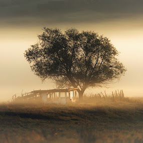Cotage under the tree by Alex Jitaru - Landscapes Prairies, Meadows & Fields