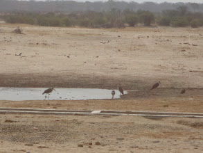 Photo: Pelicans hang out at the waterhole.