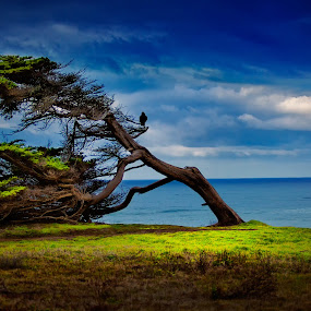 Half Moon Bay, California  by Alex Sam - Landscapes Waterscapes ( california, half moon bay )