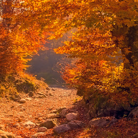 Autumn forest by Costin Mugurel - Nature Up Close Trees & Bushes ( mountains, autumn, forest, road, landscape )
