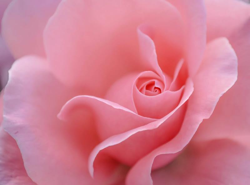 La regina dei fiori. di francesca_pannuzzo